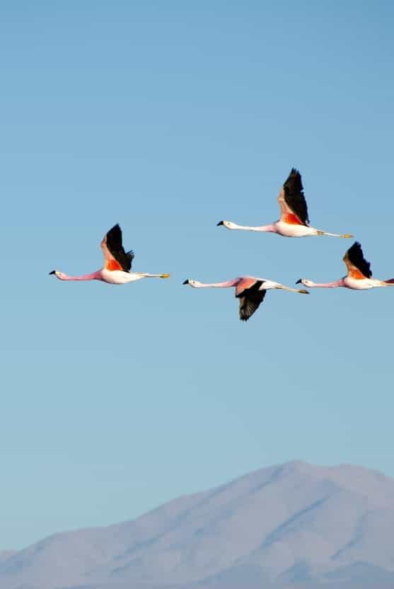Birds over Mountain